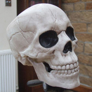 Photogrammetry Skull