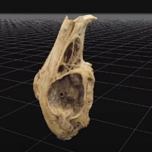 Read more about the article Photogrammetry Jig – Finally working!